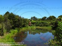 CoromandelDriving_Creek_Native_Wildlife_Sanctuary